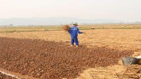 HAI DUONG, VIETNAM, il 18 ottobre: agricoltori che crescente le verdure nella t Immagini Stock Libere da Diritti