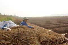 HAI DUONG, VIETNAM, il 18 ottobre: agricoltori che crescente le verdure nella t Immagine Stock Libera da Diritti