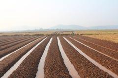 HAI DUONG, VIETNAM, il 18 ottobre: agricoltori che crescente le verdure nella t Immagini Stock