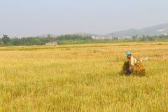 HAI DUONG, VIETNAM, October, 26: Unidentified man bring rice bun Royalty Free Stock Photos