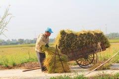 HAI DUONG, VIETNAM, October, 26: Unidentified man bring rice bun Royalty Free Stock Image