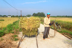 HAI DUONG, VIETNAM, October, 26: Unidentified man bring rice bun Royalty Free Stock Images
