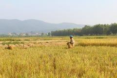HAI DUONG, WIETNAM, Październik, 26: Niezidentyfikowany mężczyzna przynosi ryżową babeczkę Zdjęcia Royalty Free