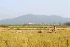 HAI DUONG, WIETNAM, Październik, 26: Niezidentyfikowany mężczyzna przynosi ryżową babeczkę Zdjęcie Stock