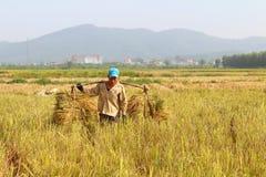 HAI DUONG, WIETNAM, Październik, 26: Niezidentyfikowany mężczyzna przynosi ryżową babeczkę Zdjęcia Stock