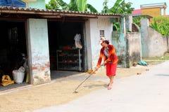 HAI DUONG, WIETNAM, WRZESIEŃ, 26: Biednego rolnika susi ryż po brzęczeń Zdjęcia Royalty Free