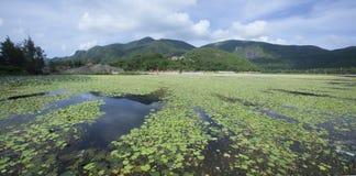 An Hai lake Stock Image