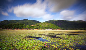An Hai lake Royalty Free Stock Photos