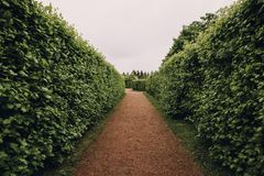 Haie de plante verte, voie dans Petergof dans le jardin de StPetersburg ou parc, vue de perspective de couloir, concept de constr Photos stock