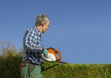 Haie de thuja d'élagage de jardinier avec des tondeuses de haie Images stock
