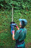 Haie de thuja de coupe de jardinier avec des tondeuses de haie Photos stock
