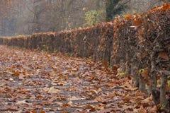 Haie en automne Photo stock
