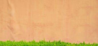 Haie verte avec le mur en béton photographie stock