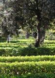 Haies dans un jardin, fond Image libre de droits