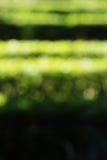Haies dans un jardin, fond brouillé Image libre de droits