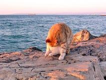 Haifa cat and Haifa Bay September 2003 Royalty Free Stock Image