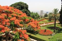 Haifa Garden i Israel Arkivfoto