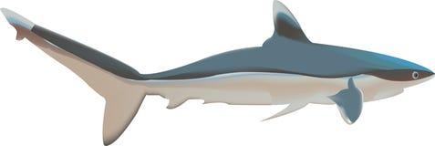 Haifisch-Abbildung Stockbild