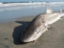 Haifisch auf Strand stockfotos