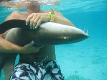 Haifisch in Belize Zentralamerika Stockbilder