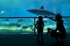 Haifisch-Bucht in der Seewelt Gold Coast Queensland Australien stockbild