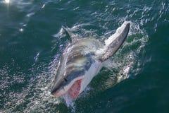 Haifisch, der den Ozean durchbricht Stockfotografie