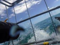 Haifisch, der einen Haifischkäfig schlägt stockbilder