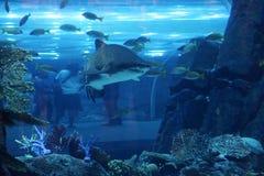 Haifisch an Dubai-Mall Stockbilder