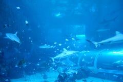 Haifisch in einem Aquarium stockfoto