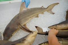Haifisch für Note lizenzfreies stockbild