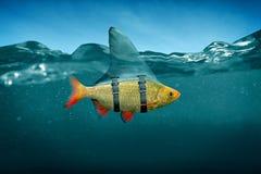 HAIFISCH-FLOSSE Lizenzfreies Stockbild