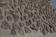 Haifisch-Flossen Stockfotografie