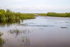 Haifisch-Fluss Slough Lizenzfreies Stockfoto
