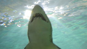 Haifisch im Aquarium stock video footage