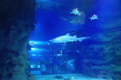 Haifisch im Pool Stockbilder