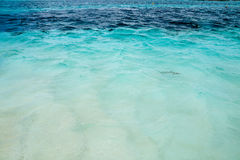 Haifisch im Wasser, der Indische Ozean Stockfotos