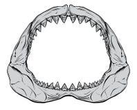 Haifisch-Kiefer Stockfoto