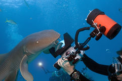 Haifisch-Schießerei Stockfotografie
