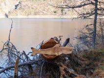 Haifisch schnitzte aus dem Holz heraus, das auf einem Baumstumpf stillsteht Stockbilder