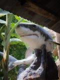 Haifisch-Statue flog lizenzfreies stockfoto