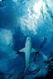 Haifisch und Himmel Stockfotos