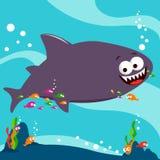 Haifisch und Reinigerfische Stockfotografie