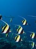 Haifisch und Schule der tropischen Fische Lizenzfreies Stockbild