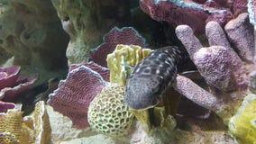 Haifisch-Verstecken Stockbild
