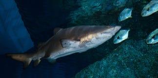 Haifischaquarium stockbild