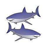 Haifische Stockfotografie