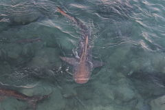 Haifische #3 Stockbilder