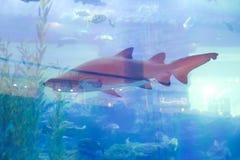 Haifische - Aquarium Dubai stockbilder