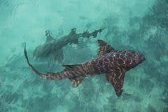 Haifische, die von oben einkreisen Stockbilder