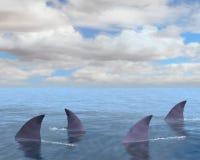 Haifische, Haifisch-Flosse, Meer, Ozean Stockbild